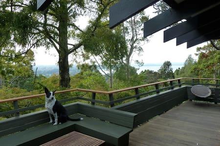 Just like Borneo, or Heaven. - Titirangi