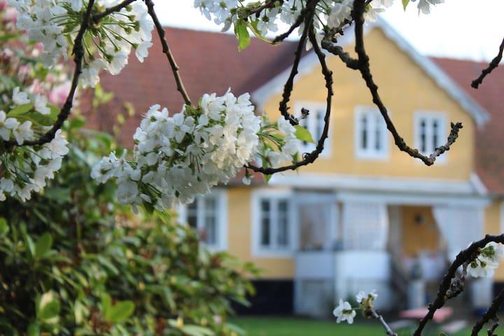 Lantligt B&B nära Helsingborg - Helsingborg - Bed & Breakfast