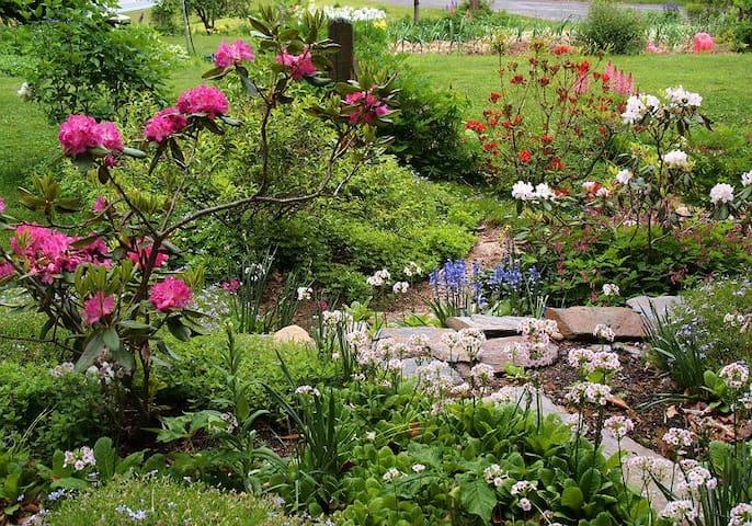 Terraced garden beside house in spring