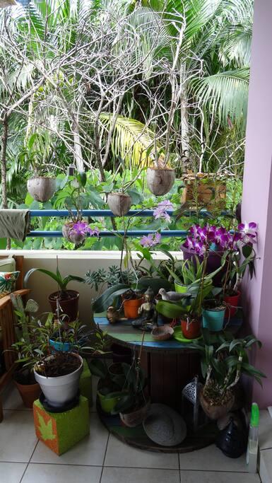 les plantes de la terrasse.