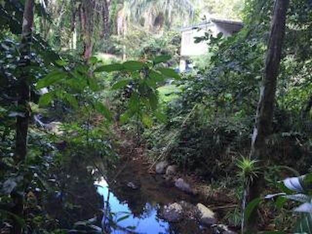 Rainforest House - Río Grande - House