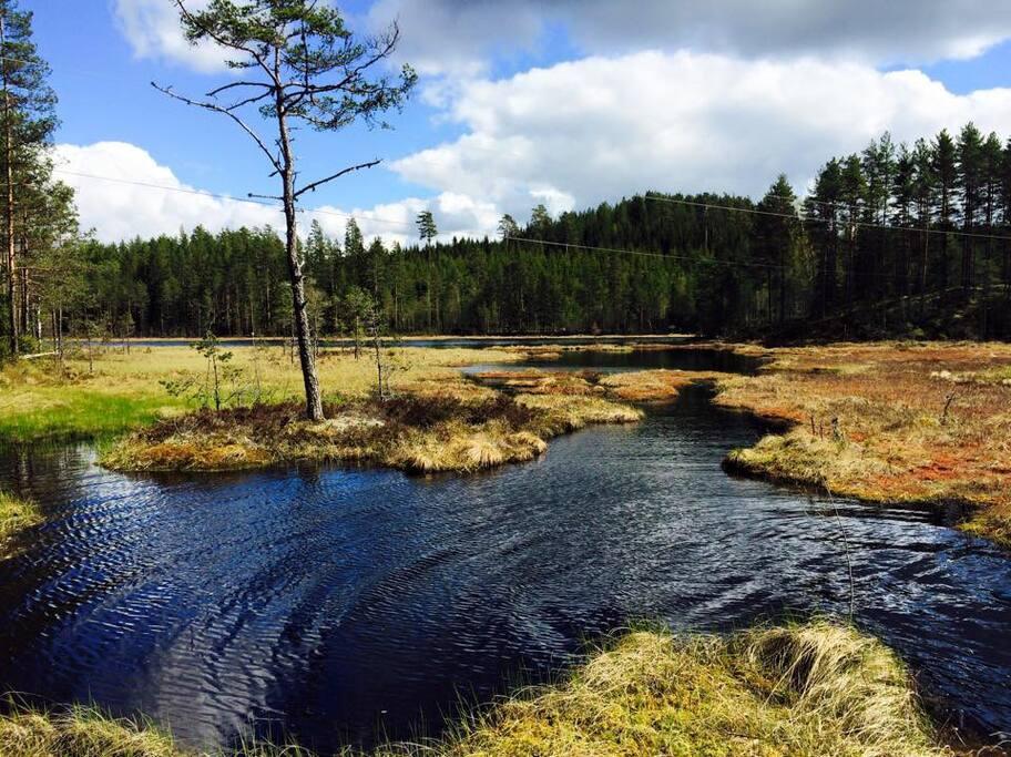 Hytta ligger 315 meter fra dette fiskevannet, Veksaren.