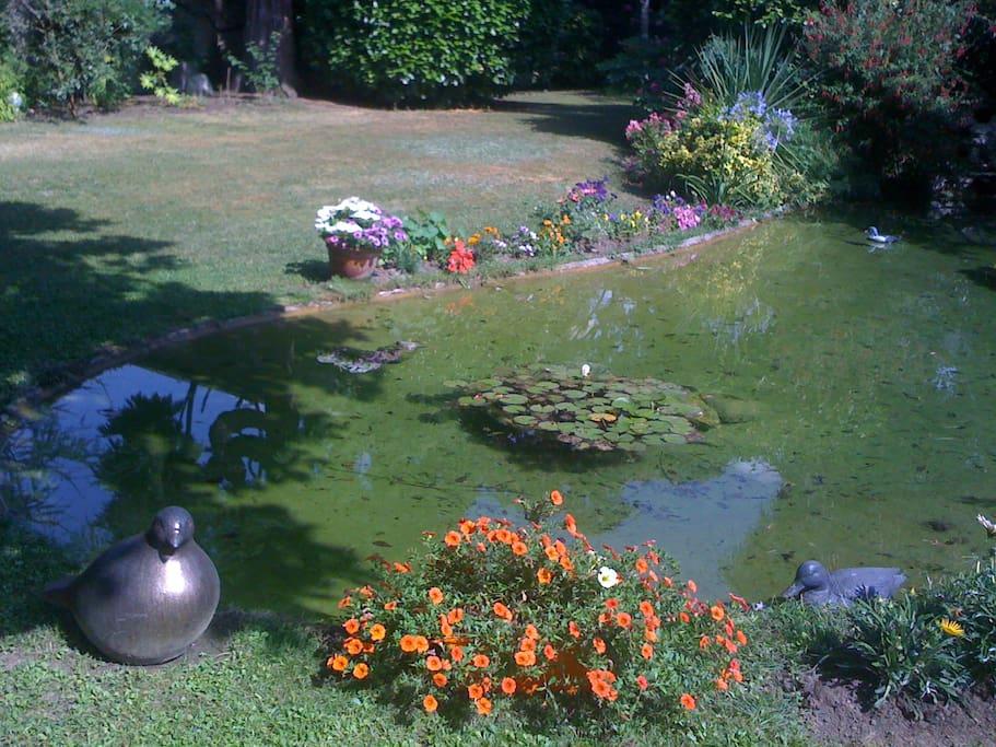 bassin au pied de la gloriette avec truites et nenuphards;