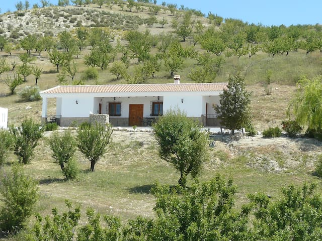 Villa set in Almond and Olive groves
