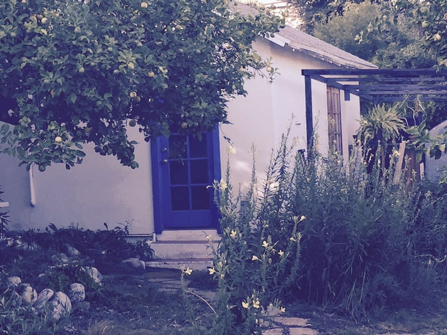 Our cottage, a free standing structure surrounded by lush gardens including lemon and fig trees.