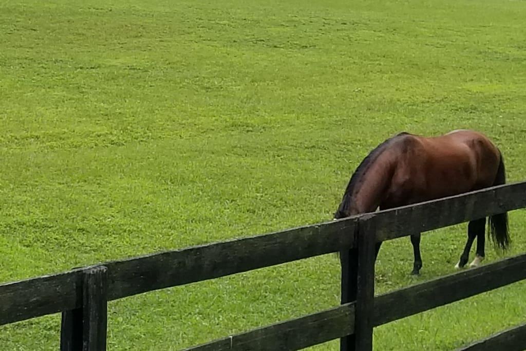 Vanidoso in the pasture