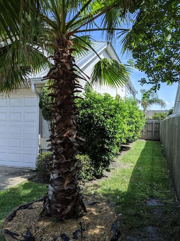 Side yard, western side of house with Washingtonia palm trees