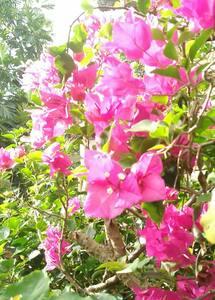 Calme aux chants  des oiseaux et du vent - La Trinité - Дом