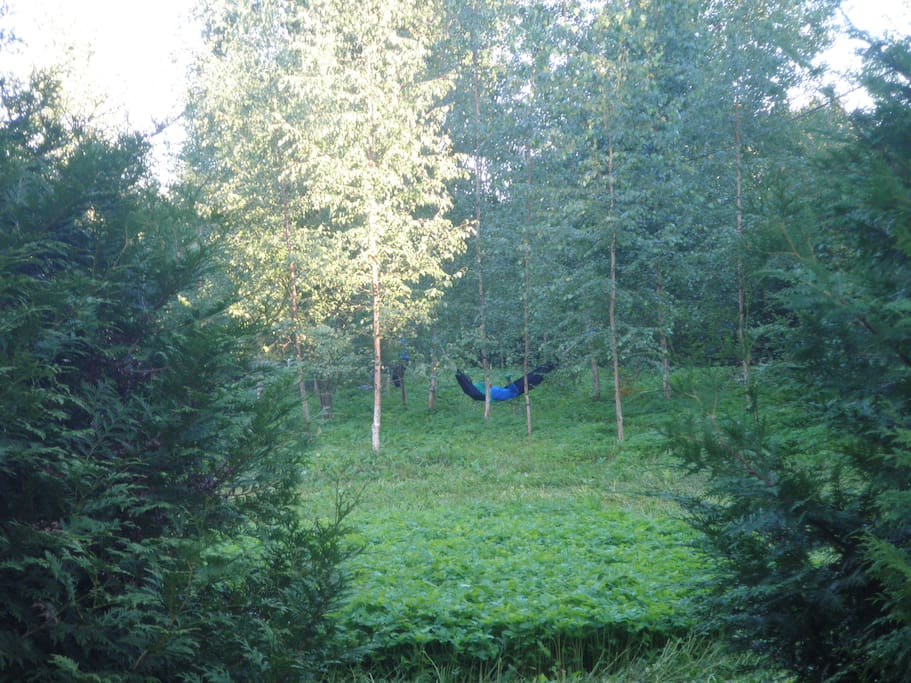 You can rest in the hammock hanging between birch trees