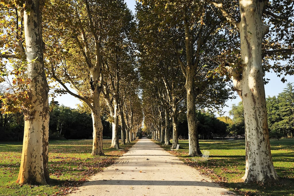 Park of 4 hectares