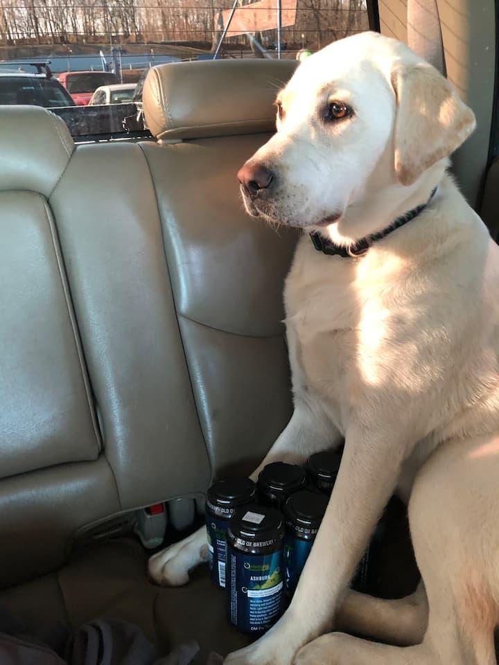 Super Clean Pet Friendly Listings Of Loudoun