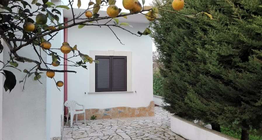 Home Viva - Aradeo - บ้าน