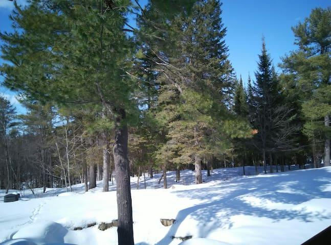 Backyard at winter