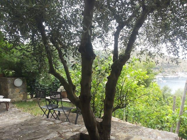 Villa Belvedere - il Cappero - Palinuro - Dům