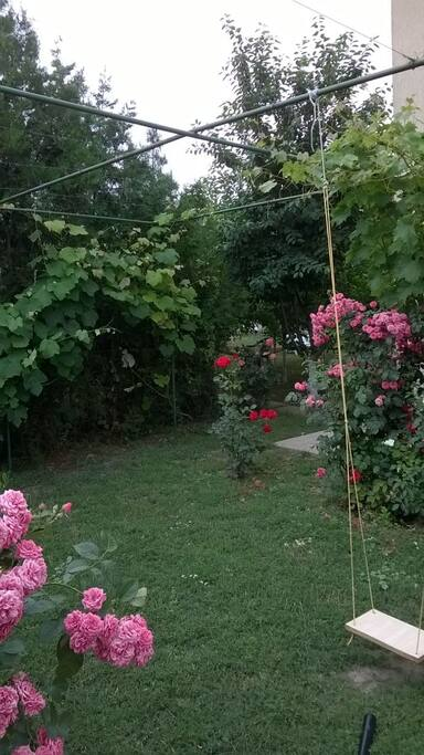 Roses bushes