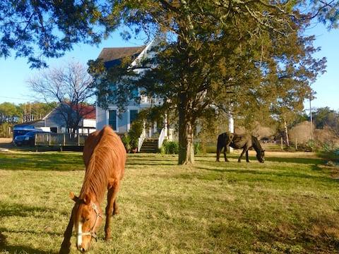 Enchanted Cottage of Hunting Creek, farm, horses