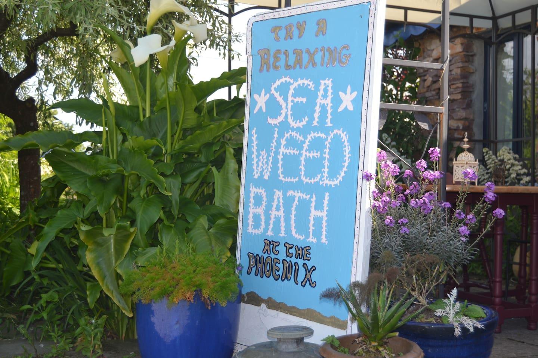 seaweed (URL HIDDEN) relaxing
