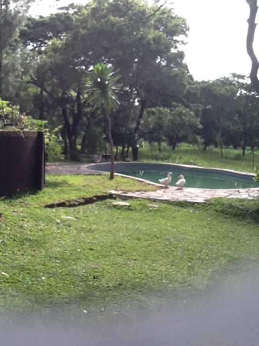 enjoy the rustic ambience  share the pool with the ducks
