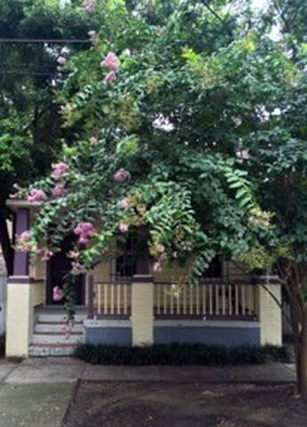 Violet Oasis in Enchanting Savannah
