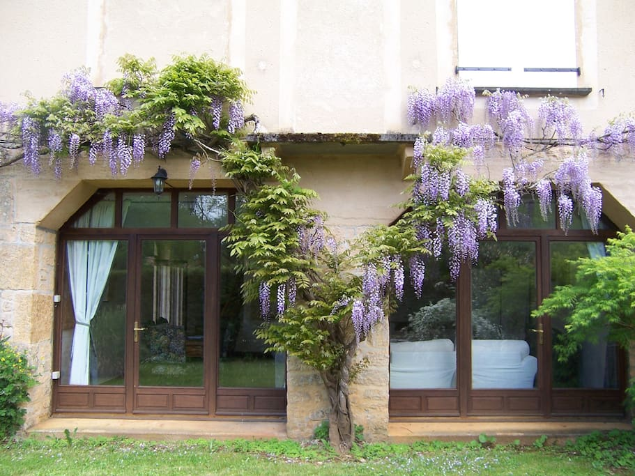 Wisteria in flower outside the lounge and dining room, door opening onto grassed area