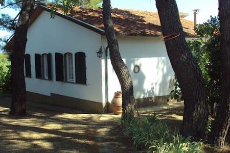 Chianti: studio indipendente - Apartment