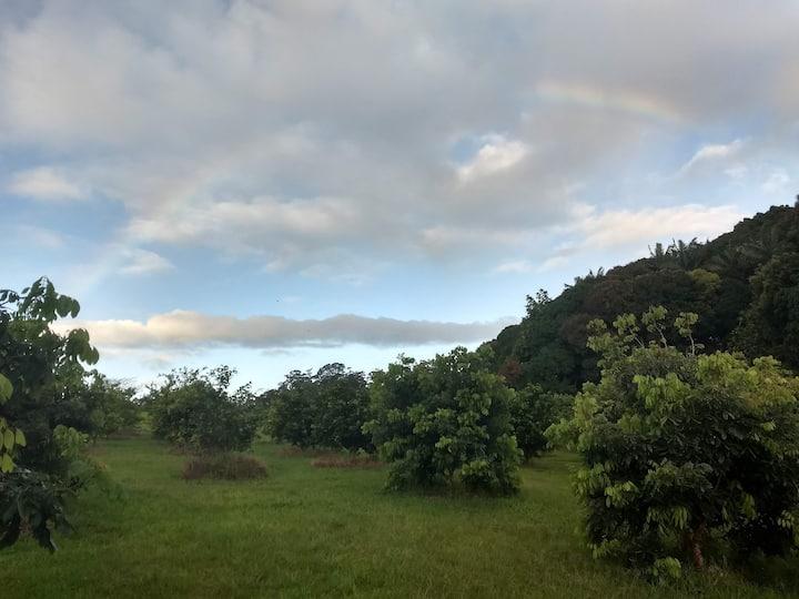Peaceful Cabin on a Hamakua Lychee Farm!