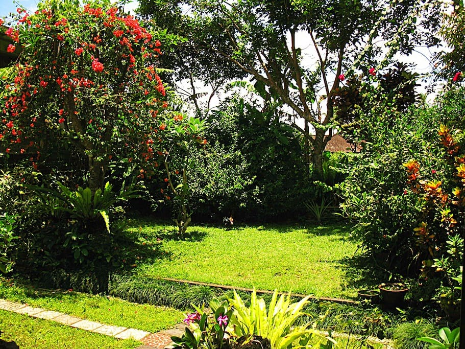 Lush garden filled with flowers and butterflies - and sometimes sun bathing chickens!
