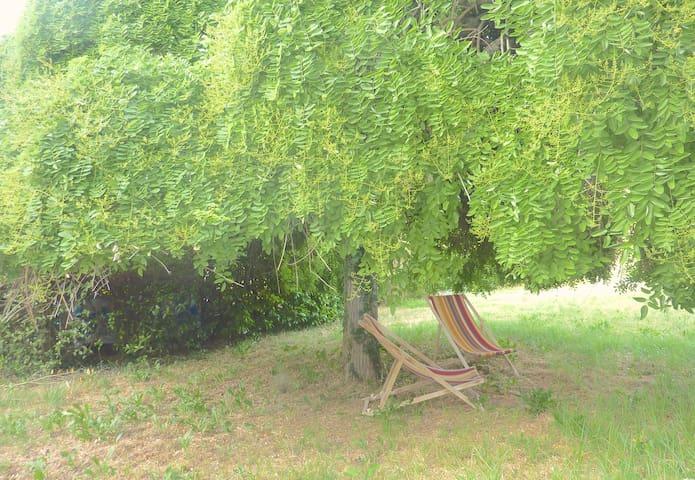 Under the Magic tree!