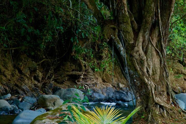 Cabaña acogedora,río en la propiedad.(Villa Fer)