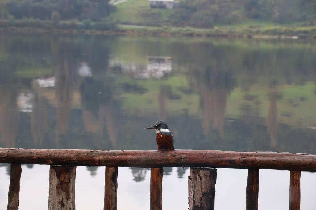 Aves autóctonas visitan el alojamiento.