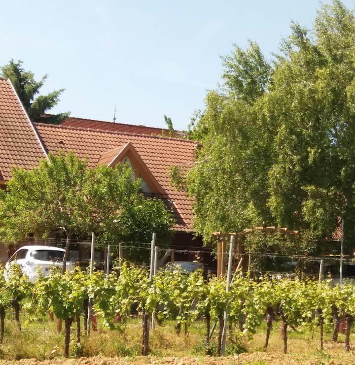 Appartement au coeur du vignoble alsacien