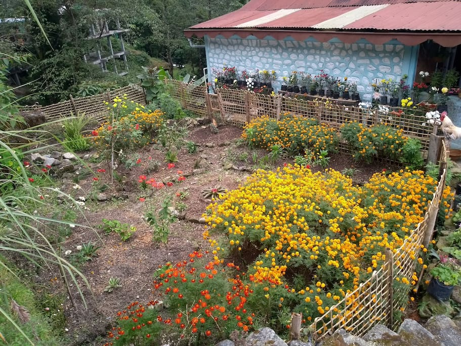 RIOT - Our flower garden and a playground for bees and butterflies.