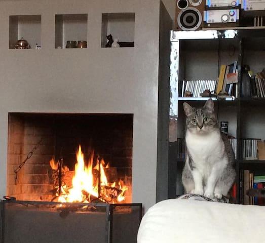 La casina dei gatti D - Fano - Byt
