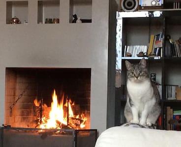 La casina dei gatti - Fano