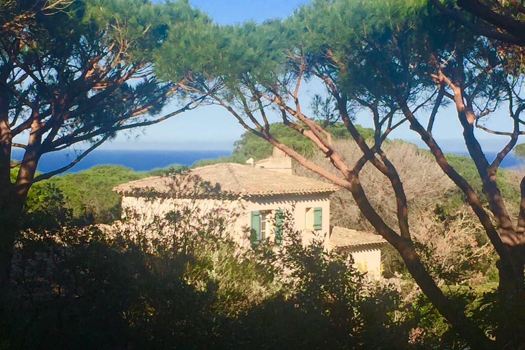 The seaview is only from the upper part of the garden due to umbrella tress
