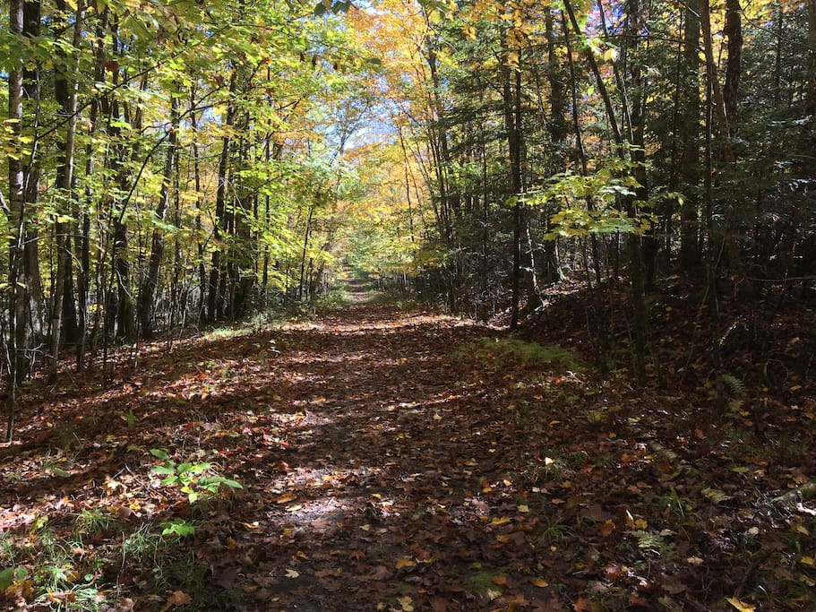 Private road leading to the cottage. Cottage property is very quiet yet only 5 minutes from main highway.  Circular driveway has ample parking for larger vehicles.