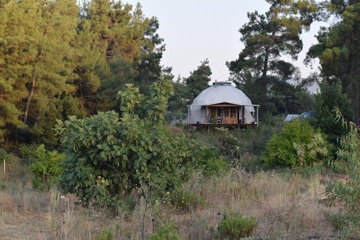 Orman içinde Jeodezik Kubbe Ev