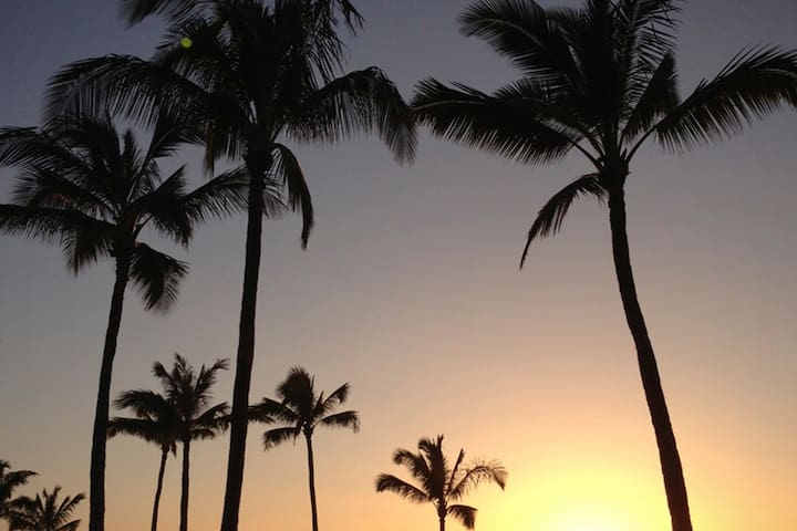 The heavenly image of palm trees swaying in the breeze