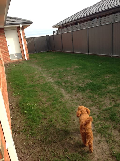 Enclosed backyard for furry friends