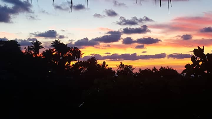 Villa Clavellinas, Jungle meets Paradise