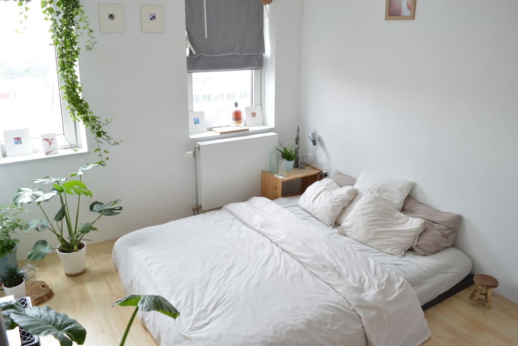 Private bedroom with TV, enough plants for fresh air and enough closet space for clothing and other personal stuff