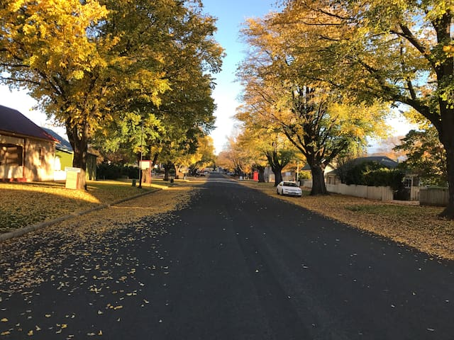 Autumn leaves in Ross... the Main Street