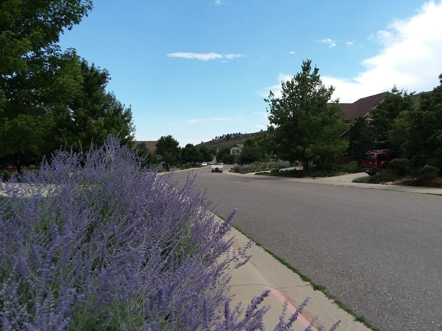 Follow the lavendar road to Our Happy Place!