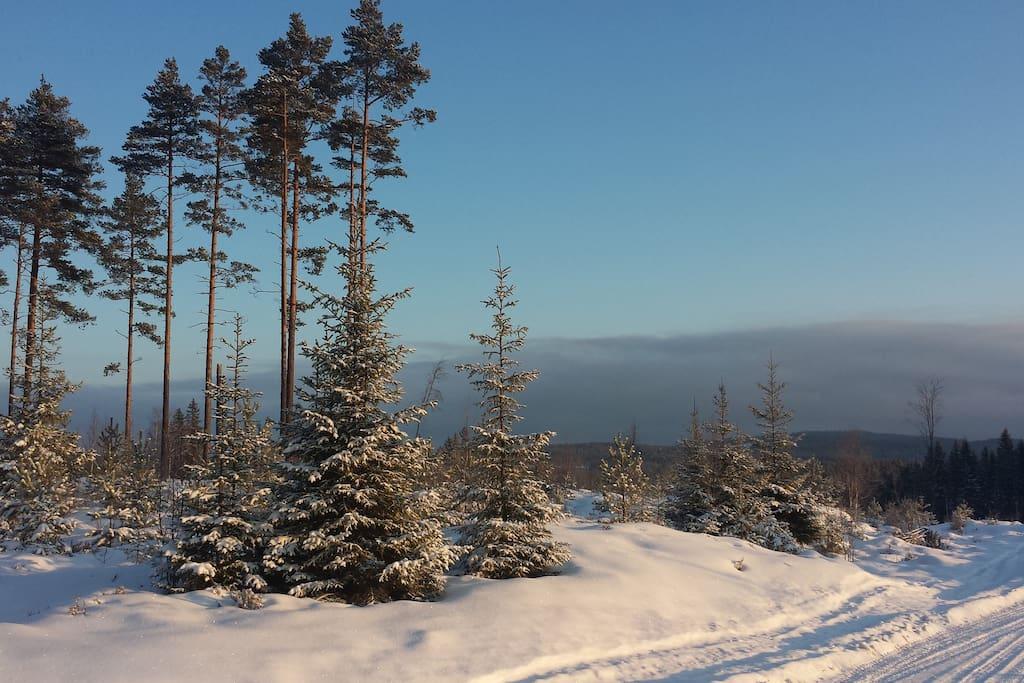Surroundin area wintertime