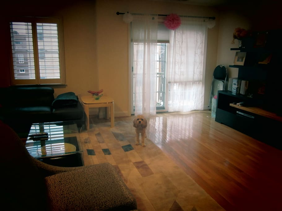 Large living room, with our tiny hypoallergenic dog in the middle.