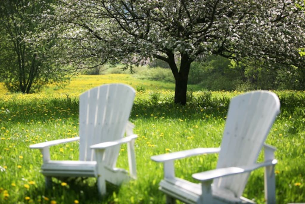 Outdoor Seating in a Field of Dandelions & Luscious Greens