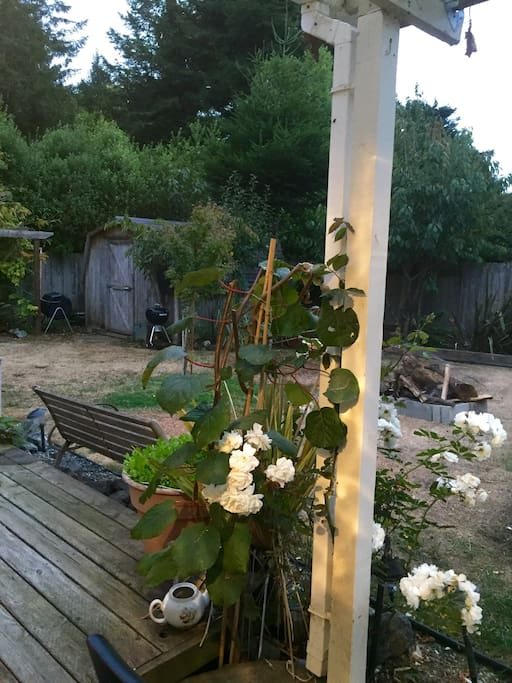 Beautiful garden during the summer