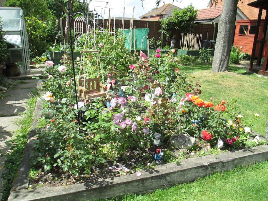 My lovely Rose bed