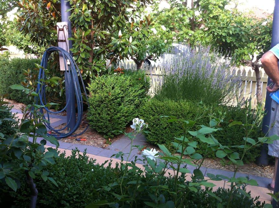 Beautiful front garden,