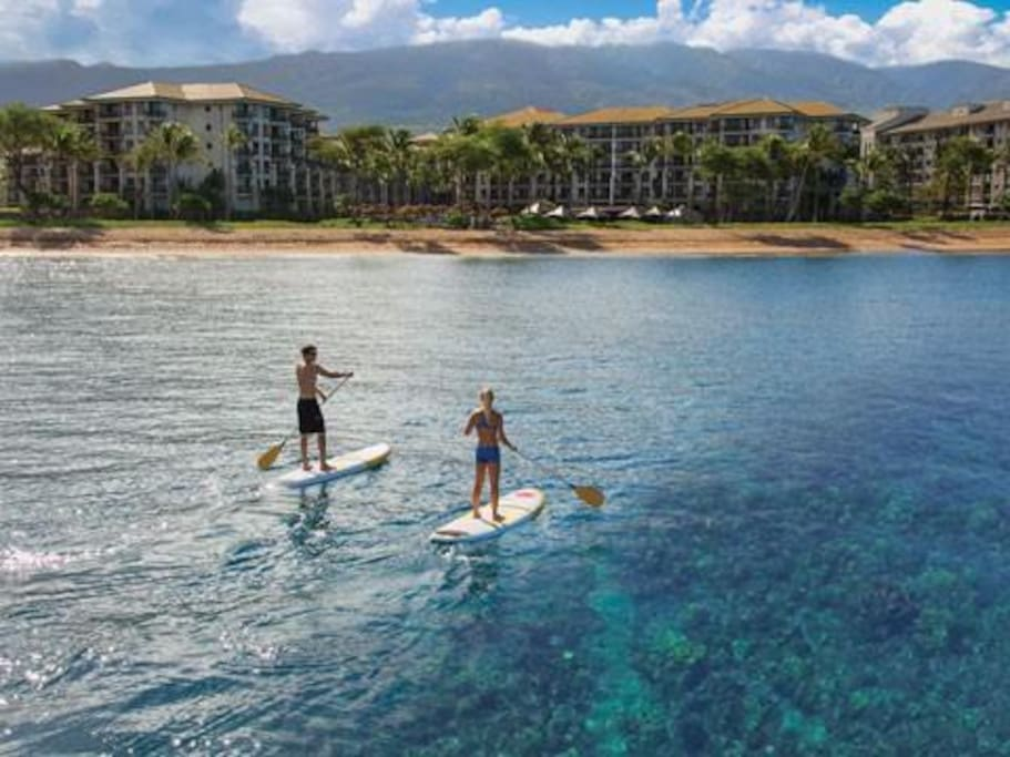 View reefs and fish from a stand up paddleboard